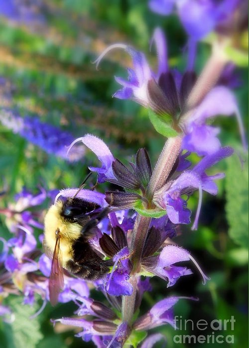 Bumble Greeting Card featuring the photograph Bumble Bee On Flower by Renee Trenholm