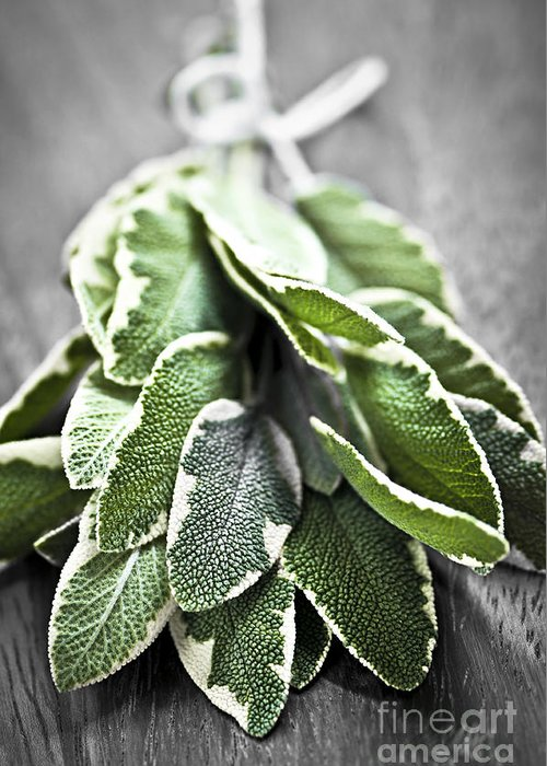 Herb Greeting Card featuring the photograph Bunch Of Fresh Sage by Elena Elisseeva