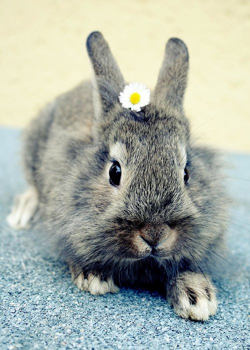 Kaninchen Greeting Card featuring the photograph Bunny by Falko Follert