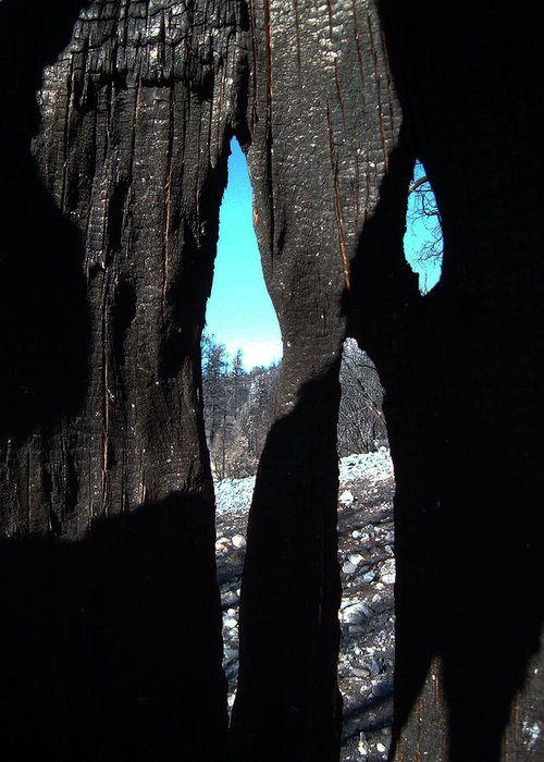 Nature Greeting Card featuring the photograph Burned Trees 10 by Naxart Studio