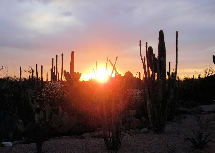 Desert Greeting Card featuring the photograph Burning Horizon by