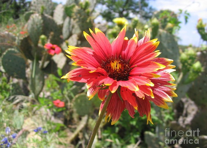 Flower Greeting Card featuring the photograph Bursting by Mark Robbins