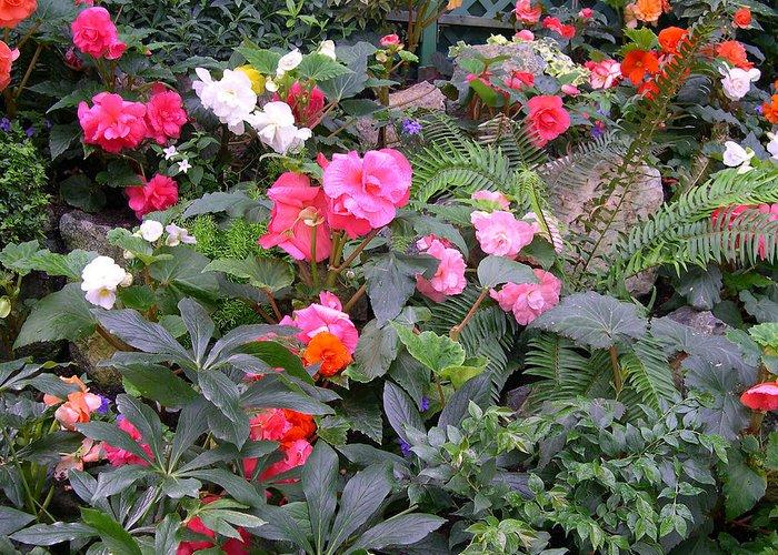 Butchart Begonia Garden Digital Art By Claude Mccoy