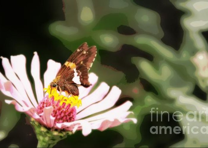 Greeting Card featuring the photograph Butterfly Flower by Brian Seidenfrau