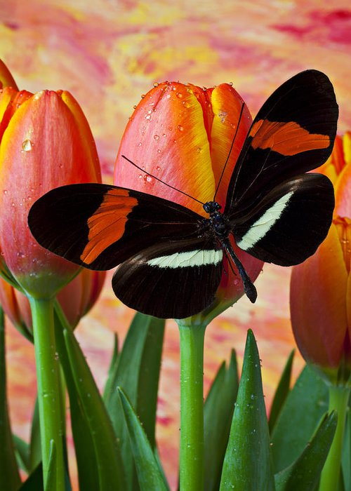 Butterfly Greeting Card featuring the photograph Butterfly On Orange Tulip by Garry Gay