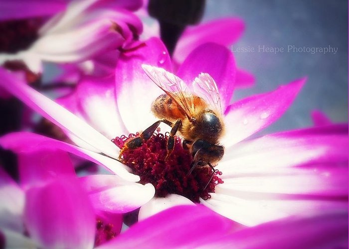 Macro Greeting Card featuring the photograph Buzz Wee Bees Ll by Lessie Heape