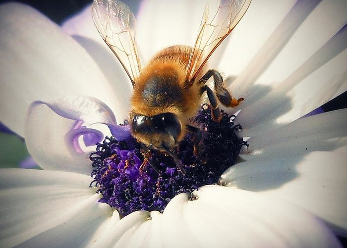 Bee Greeting Card featuring the photograph Buzz Wee Bees Lll by Lessie Heape