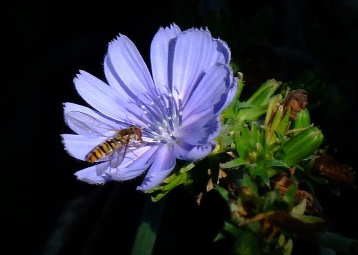 Bee Greeting Card featuring the photograph Buzzy In Blue by Alison Richardson-Douglas