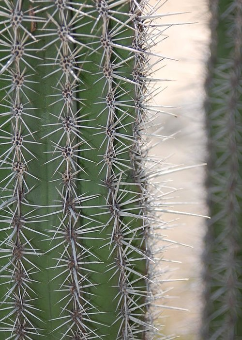 Greeting Card featuring the photograph Cabo Cacti Before by Paula OReilly