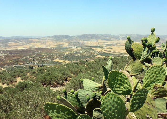 Cactus Greeting Card featuring the photograph Cactus At Samaria by Munir Alawi