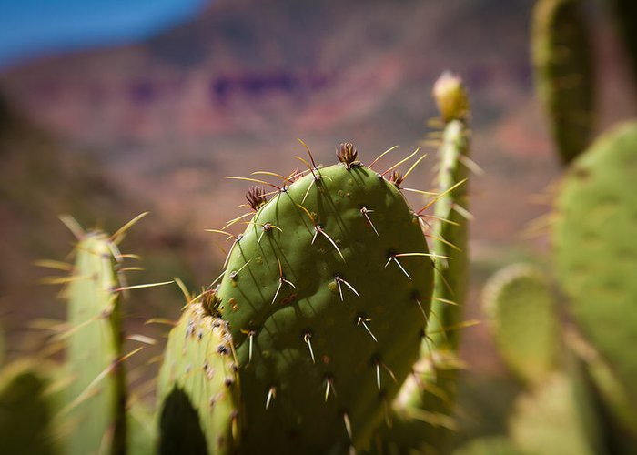 Canon D7 Greeting Card featuring the photograph Cactus With A View by Paul Roach