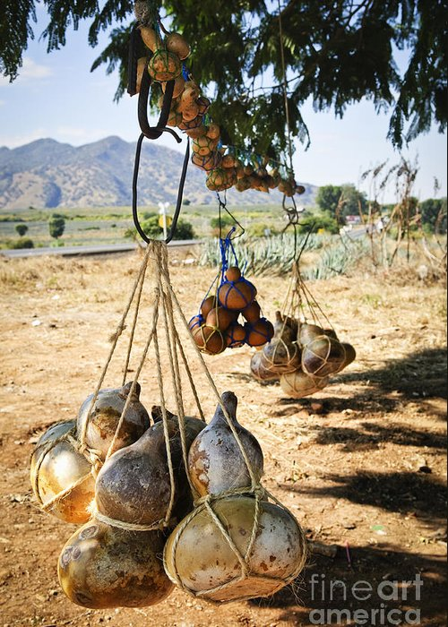 Calabash Greeting Card featuring the photograph Calabash Gourd Bottles In Mexico by Elena Elisseeva