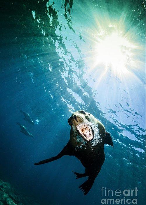 California Sea Lion Greeting Card featuring the photograph California Sea Lion, La Paz, Mexico by Todd Winner