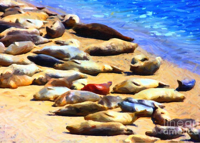 Bayarea Greeting Card featuring the photograph California Sunbathers . Harbor Seals by Wingsdomain Art and Photography