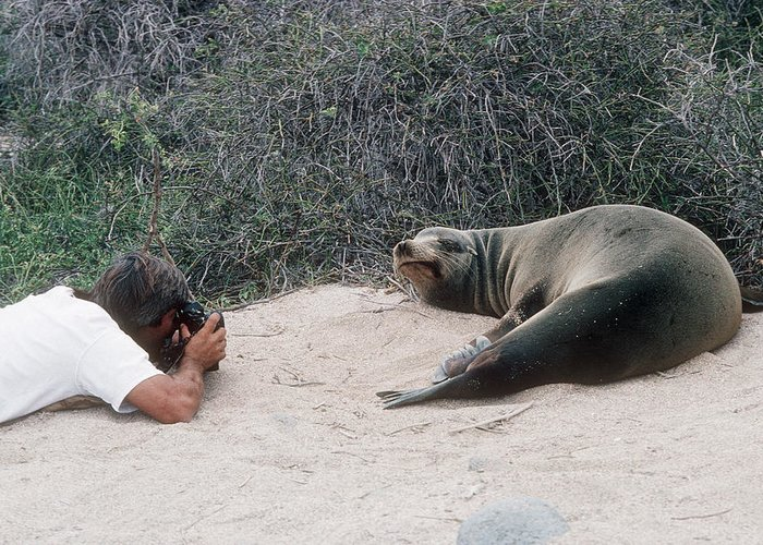 Californian Sea Lion Greeting Card featuring the photograph Californian Sea Lion With A Tourist by Georgette Douwma