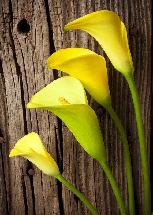 Calla Lily Greeting Card featuring the photograph Calla Lilies Against Wooden Wall by Garry Gay