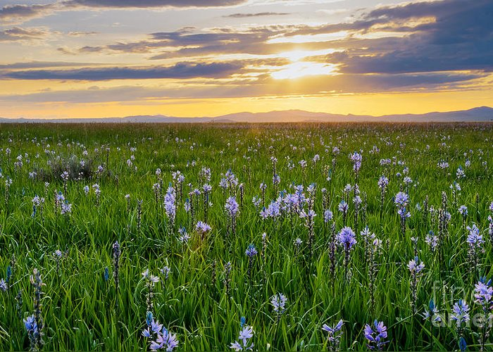 Camas County Greeting Card featuring the photograph Camas Fields by Idaho Scenic Images Linda Lantzy