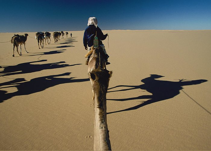 Color Image Greeting Card featuring the photograph Camel Caravan And Their Shadows by Carsten Peter