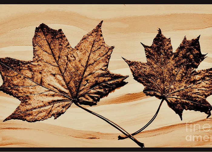 Photo Greeting Card featuring the photograph Canadian Leaf by Marsha Heiken