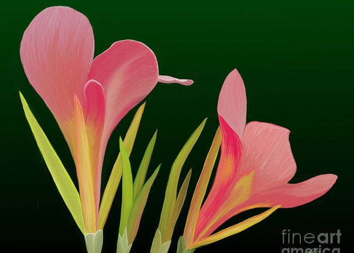 Flowers Greeting Card featuring the painting Canna Lilly Whimsy by Rand Herron