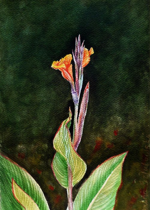 Canna Lilies Greeting Cards