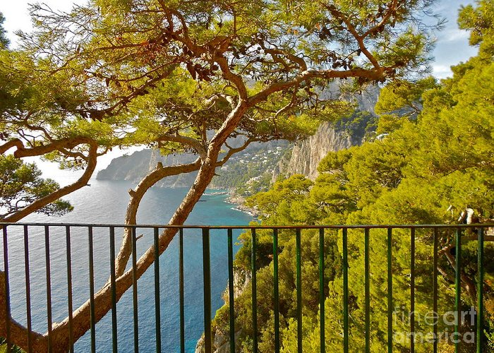 Angelica Dichiara Greeting Card featuring the photograph Capri Panorama With Tree by Italian Art