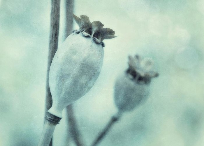 Blue Greeting Card featuring the photograph Capsule Series by Priska Wettstein