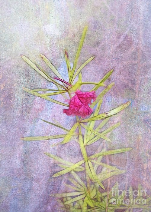 Captured Greeting Card featuring the photograph Captured Blossom by Judi Bagwell