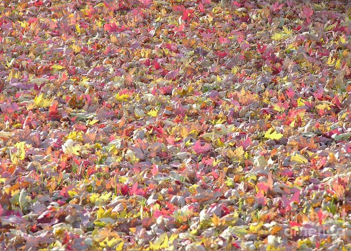 Leaves Greeting Card featuring the photograph Carpet Of Leaves by Yumi Johnson