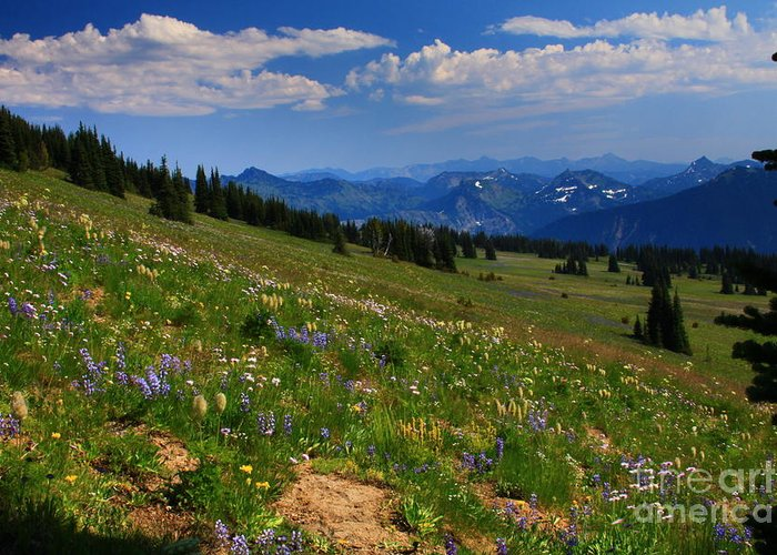 Mountain Greeting Card featuring the photograph Cascades And Wildflowers by Angela Q