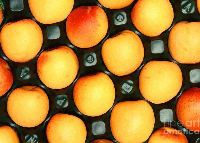 Apricot Greeting Card featuring the photograph Castlebrite Apricot by Photo Researchers