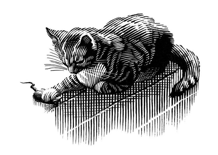 Domestic Cat Greeting Card featuring the photograph Cat And Mouse, Artwork by Bill Sanderson