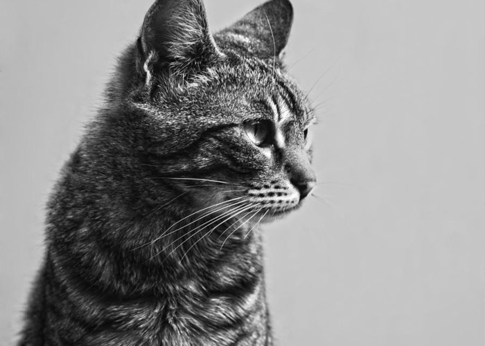 Cat Hdr Look Sight Greeting Card featuring the photograph Cat by Chelaru Catalin Ionut