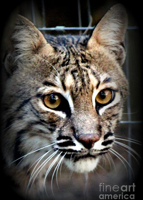 Wild Animals Greeting Card featuring the photograph Cat Fever by Kathy White