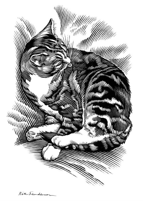 Domestic Cat Greeting Card featuring the photograph Cat Grooming Its Fur, Artwork by Bill Sanderson