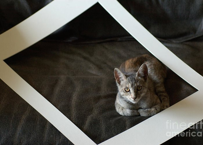 Cat Greeting Card featuring the photograph Cat In A Frame by Micah May