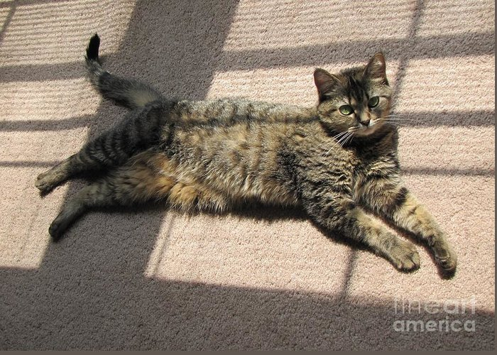 Cat Greeting Card featuring the photograph Cat Life by Michelle Powell