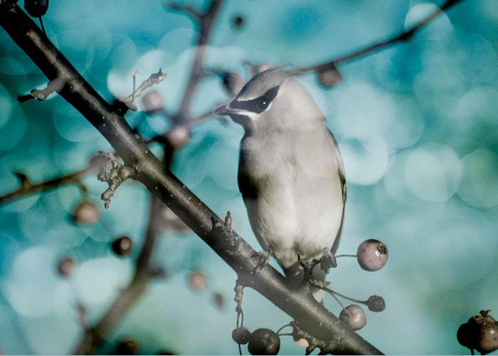 Bird Greeting Card featuring the photograph Catch The Bandit by Trish Tritz
