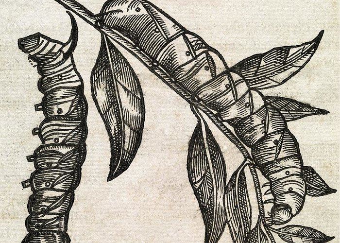 Animal Greeting Card featuring the photograph Caterpillars, 17th Century Artwork by Middle Temple Library
