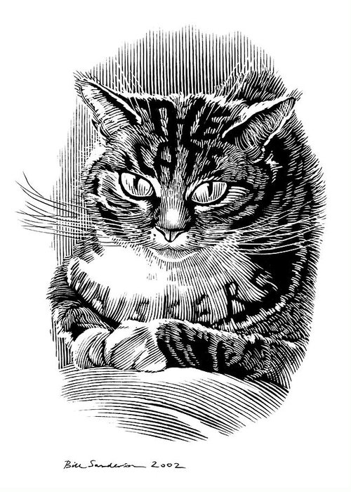 Domestic Cat Greeting Card featuring the photograph Cat's Whiskers, Conceptual Artwork by Bill Sanderson