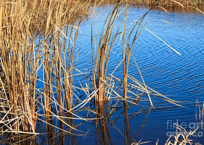 Autumn Greeting Card featuring the photograph Cattail Reeds by Ms Judi
