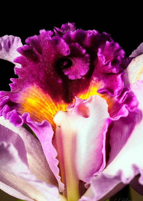 Orchid Greeting Card featuring the photograph Cattleya II by Christopher Holmes