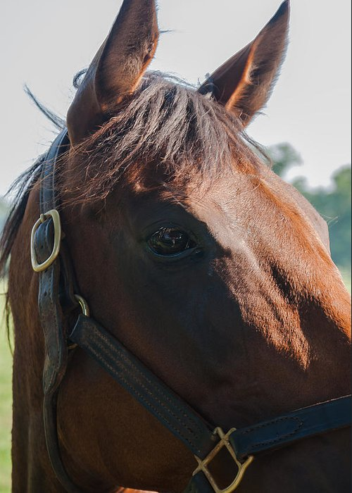 Kentucky Greeting Card featuring the photograph Charming Eye by Wayne Stacy