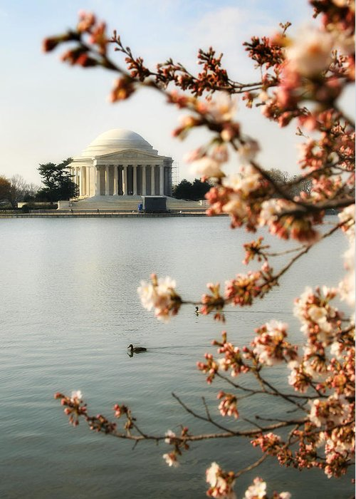 Washington Greeting Card featuring the photograph Cherry Blossom In Dc by Joe Myeress