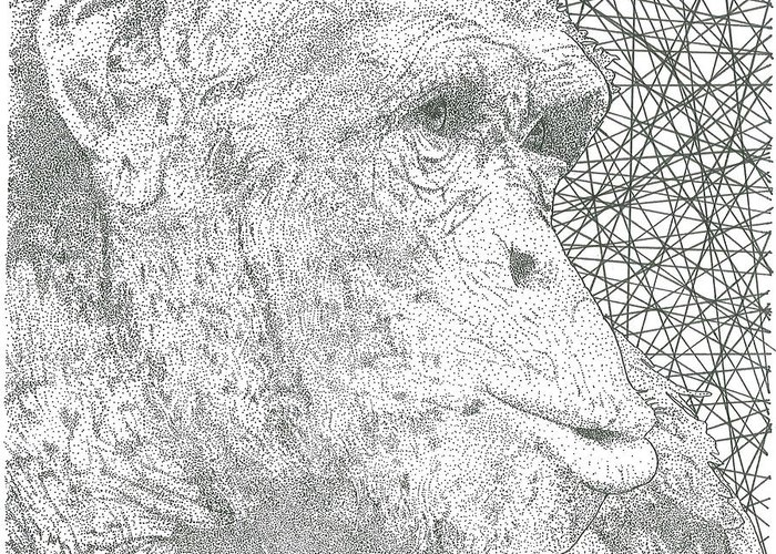 Chimp Greeting Card featuring the drawing Chimpanzee by Al Buchanan