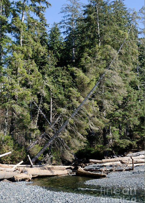 China Beach Greeting Card featuring the photograph China Creek China Beach Juan De Fuca Provincial Park Bc Canada by Andy Smy