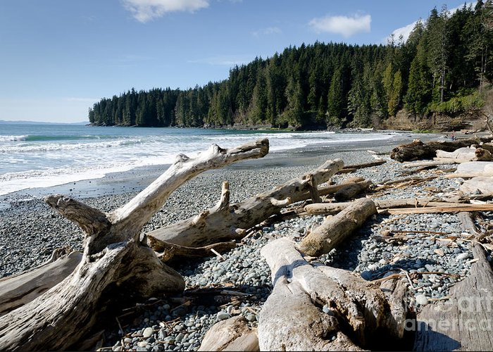 China Beach Greeting Card featuring the photograph China Driftwood China Beach Juan De Fuca Provincial Park Bc by Andy Smy