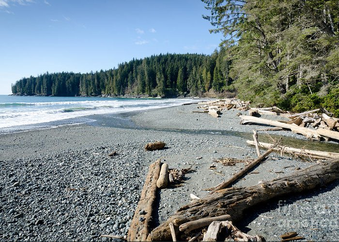 China Beach Greeting Card featuring the photograph China Wide China Beach Juan De Fuca Provincial Park Vancouver Island Bc Canada by Andy Smy