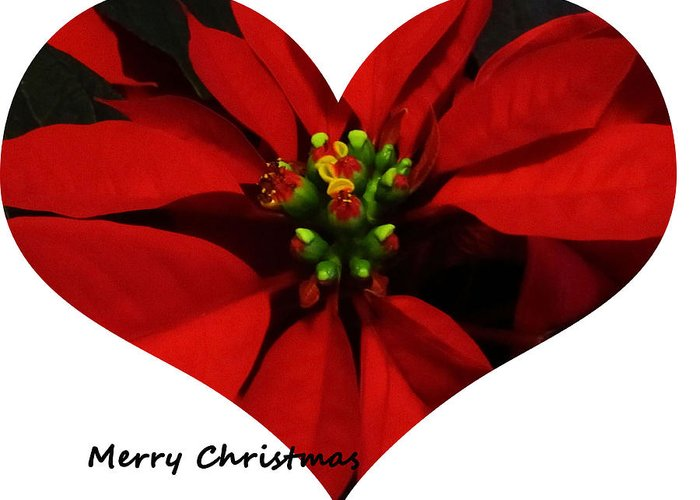 Christmas Greeting Card featuring the photograph Christmas Greetings by Vijay Sharon Govender
