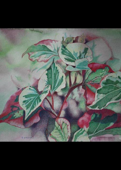 Close Focus Nature Scene Greeting Card featuring the drawing Christmas In July by Patsy Sharpe